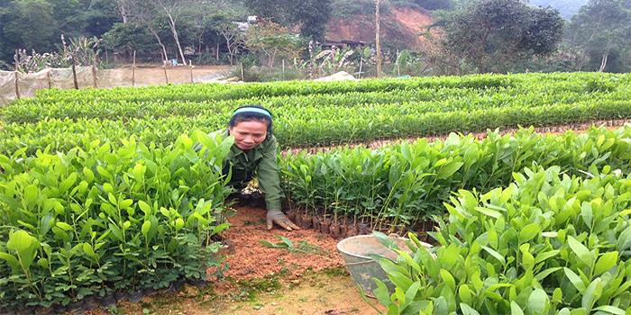 rung-thai-nguyen-yen-do